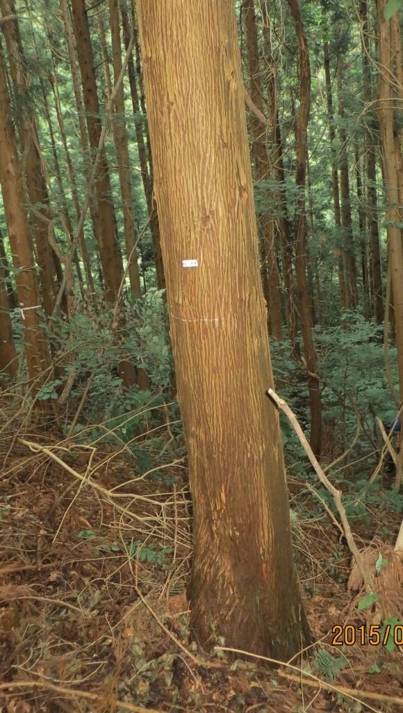 直近に枝がある